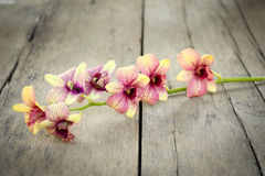 Orchid vintage. Royalty Free Stock Photography