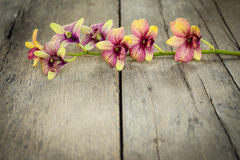 Orchid vintage. Royalty Free Stock Images