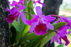 Orchid violated colors in Thailand Stock Photo