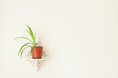 Orchid on the wall Royalty Free Stock Image