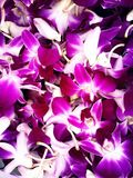 Orchid wallpaper. Orchid purple wallpaper stock photography