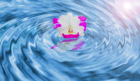 Orchid on the water. Orchid on the swirling water stock illustration
