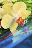 Orchid on the water Royalty Free Stock Photo