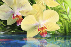 Orchid on the water Royalty Free Stock Images