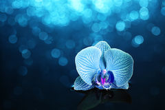 Orchid in water with lights Royalty Free Stock Images