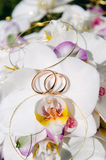 Orchid and Wedding Rings. Orchid with gold wedding bands Royalty Free Stock Photo