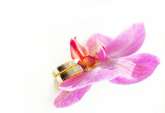 Orchid with wedding rings Stock Image