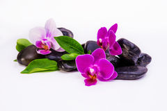 Orchid Wellness. Wellness Background with Orchid and Stones Royalty Free Stock Image