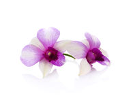 Orchid on the white background. Orchid isolate on the white background Royalty Free Stock Photography