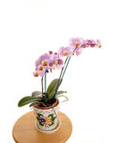 Orchid for white background. Stock Photography