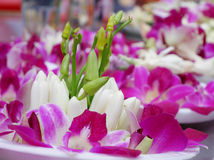 The orchid and white champaka flower offering set Royalty Free Stock Photo