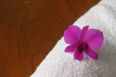 Orchid  and white cotton Stock Photo