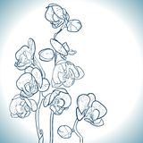 Orchid  on white Royalty Free Stock Photo