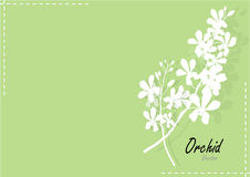 Orchid  white paper cut orchid on green background,vector illustration Royalty Free Stock Photo