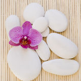 Orchid and white pebble Royalty Free Stock Image