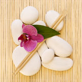 Orchid and white pebble Stock Image