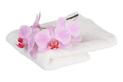 Orchid with a white towel. Pink stripy phalaenopsis orchid with a white towel Royalty Free Stock Photos