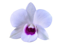 Orchid. White orchid on White  background Stock Images