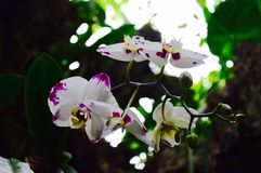 orchid in wild Royalty Free Stock Photo