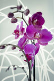 Orchid Will Bloom Light. Some times the orchids are visited by strange lights while you are not watching stock photos
