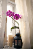 Orchid on a window Royalty Free Stock Image