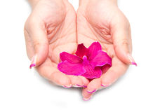 Orchid with woman hand Stock Photo