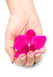 Orchid with woman hand Royalty Free Stock Photos