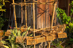Orchid wood basket Stock Image