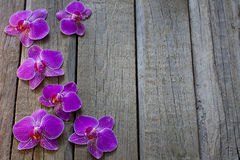 Orchid on wooden boards spa cosmetic abstract background royalty free stock photos