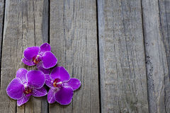 Orchid on wooden boards spa cosmetic abstract  background Stock Photography