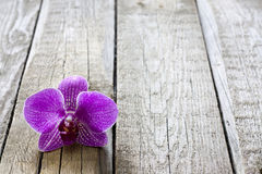 Orchid on wooden boards spa cosmetic abstract  background Royalty Free Stock Photography