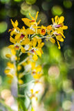 Orchid yellow blur bokeh Stock Photography
