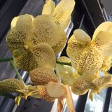 Orchid. Yellow orchid in Kew Stock Photos