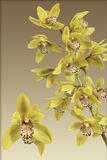 Orchid yellow. On white background Stock Photo