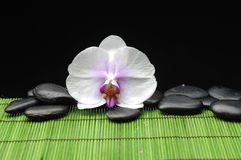 Orchid with zen ston Stock Photography