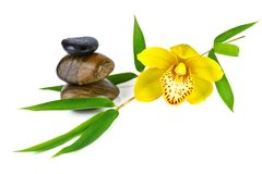 Orchid with Zen Stone isolated on white Royalty Free Stock Photography