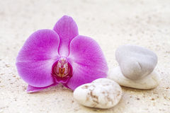 Orchid with zen stones Stock Image