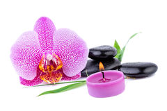 Orchid with zen stones spa concept royalty free stock image