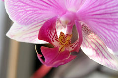 Orchid2. Fresh blossom of Orchid in a greenhouse Stock Photo