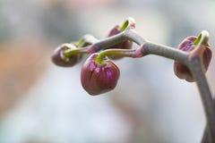Orchidaceae Στοκ εικόνες με δικαίωμα ελεύθερης χρήσης