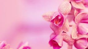 Orchidaceae Immagini Stock