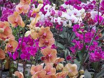 Bright exotic orchids royalty free stock images