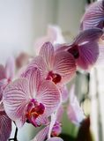 Orchidaceae flower from the window. Artistic look in vintage colours. Royalty Free Stock Photos