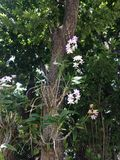 Orchidaceae Plants with Flowers Growing on a Tree in Miami. Royalty Free Stock Images