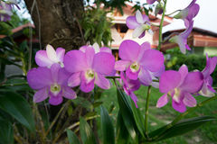 Orchidaceae purpur kwiat Fotografia Royalty Free