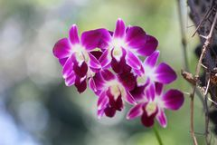 A very beautiful orchid flower royalty free stock photography