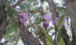 Orchidae på träd royaltyfri foto