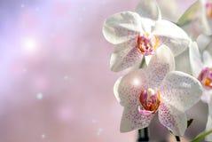 Orchidblommor Arkivfoto