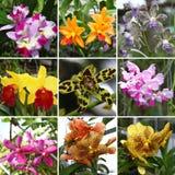 Orchide collage royaltyfri fotografi