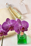 Orchidée dans la salle de bains Images libres de droits